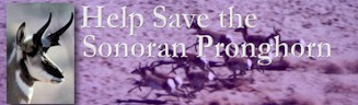 Save the Sonoran Pronghorn Sheep